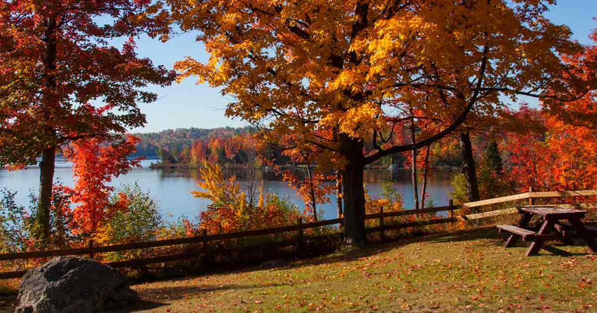 frolic-in-fall-foliage-Marquette